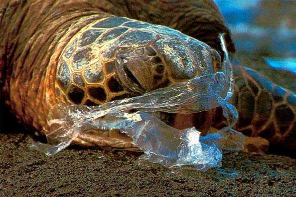 Turle-eats-plastic